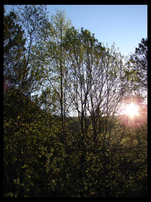 May 3, 2007 - Modalen morning