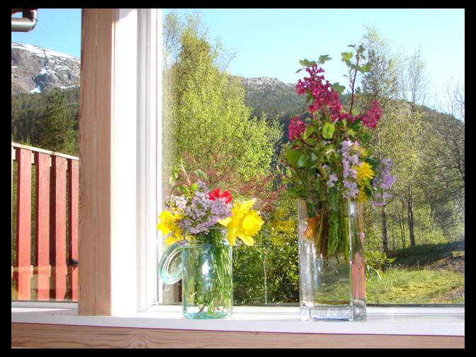 May 2, 2007 - Modalen flowers