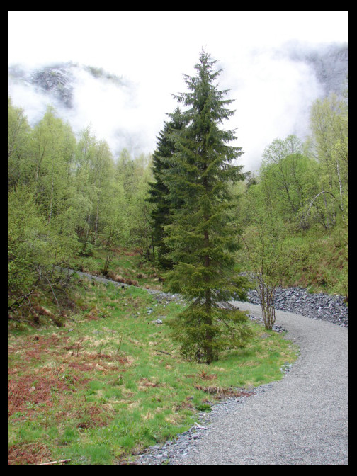 May 8, 2007 - Modalen