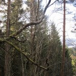 March 1, 2014 - Ulvenfjellet walk