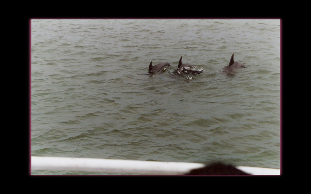 June 2004 - Hilton Head dolphins