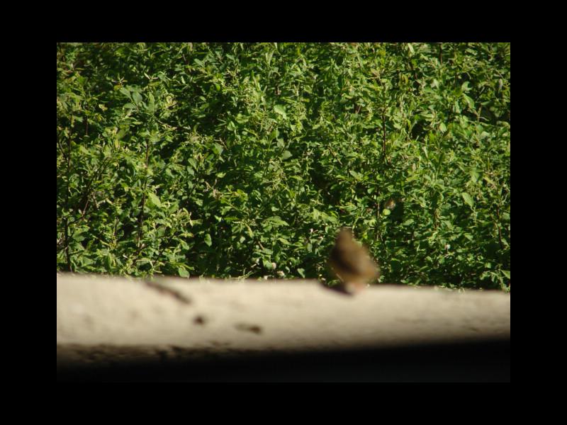 June 7, 2014 - birds in Lysekloster