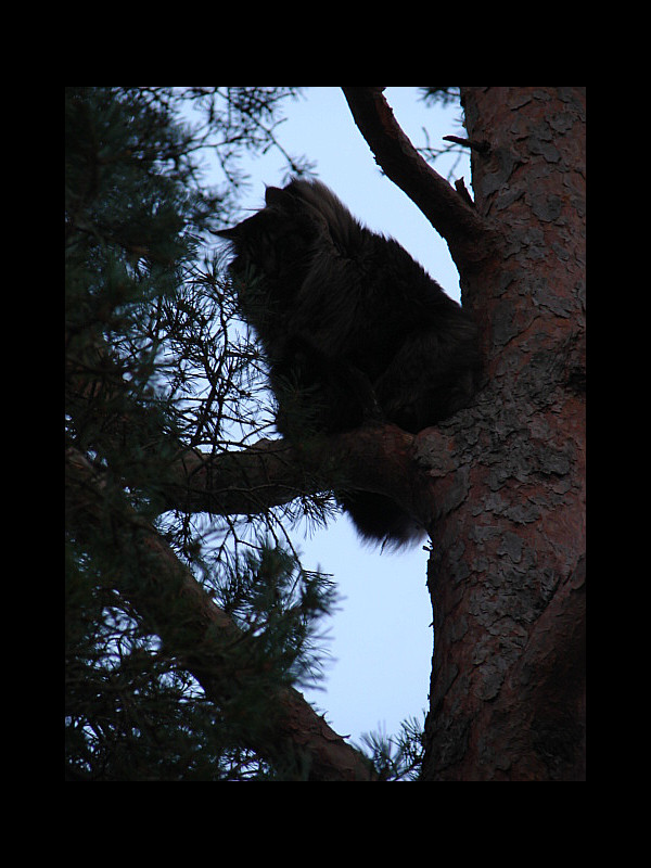 January 27, 2014 - cat up a tree