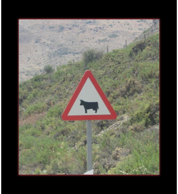 August 15, 2014 - beware of bull crossing