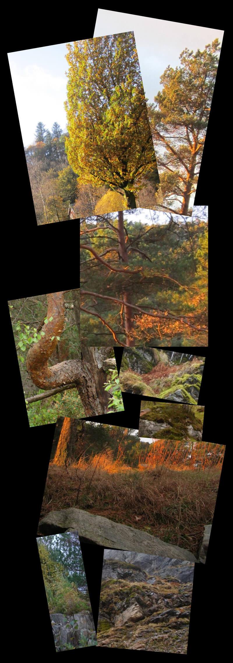Norwegian tree, grasses, rocks, moutains, sky