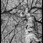 January 22, 2015 - nature in black and white